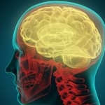 Human Brain - News Update 22nd August