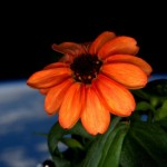 first-space-flower